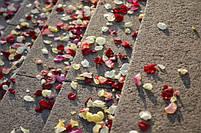 Лепестки роз на свадьбу фиолетовые 150 шт., фото 3