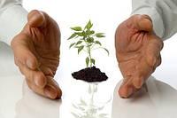 Как сажать рассаду (от А до я)