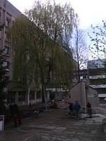 Зрізання дерев.