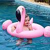 Надувной круг-ходунки Фламинго