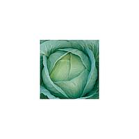 Амагер насіння капусти 1 гр.