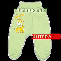 Ползунки (штанишки) на широкой резинке р. 62 демисезонные ткань ИНТЕРЛОК 100% хлопок ТМ Алекс 3165 Зеленый1