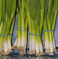 Лук на перо Савел F1 50 000 семян