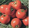 Томат Айваз 331 F1 500 семян