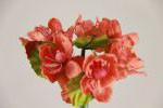 Цвет яблони 5634