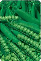 """Семена гороха оптом """"Овощное чудо"""" 100 грамм купить оптом от производителя в Украине 7 километр"""