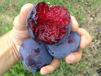 В 2017 году мировой рынок захватит фрукт с самым большим содержанием антиоксидантов в мире
