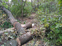 Из Украины пытались вывезти 56 вагонов ценной древесины