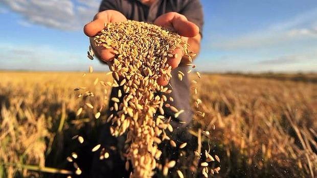 ТОП-10 новостей аграрной недели: все, что вы могли пропустить