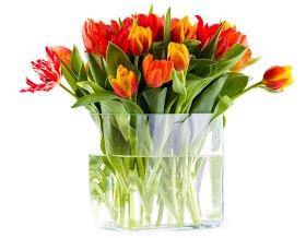 С праздником, дорогие женщины! С 8 марта!!!