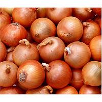 Тареско F1 семена лука репчатого среднего (Hazera) 250000 шт