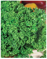 """Семена петрушки оптом """"Парамоунт кудрявая"""" 100 грамм купить оптом от производителя в Украине 7 километр"""
