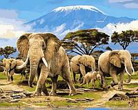 Картины по номерам 40×50 см. Утро Килиманджаро. Слоны