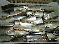 Морская рыба . Сардинелла,сардина , скумбрия свежемороженая.