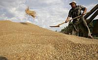 40% экспорта Украины составляет аграрная продукция