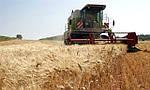 Очередной рекорд по урожаю зерновых