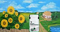 Ростки Злаков и Люцерны, Форевер, США,  Field of Greens, 80 таблеток