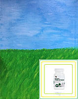 Ростки Злаков и Люцерны, Зеленые Поля (Филдз оф Гринз), Форевер, США,  Field of Greens, 80 таблеток