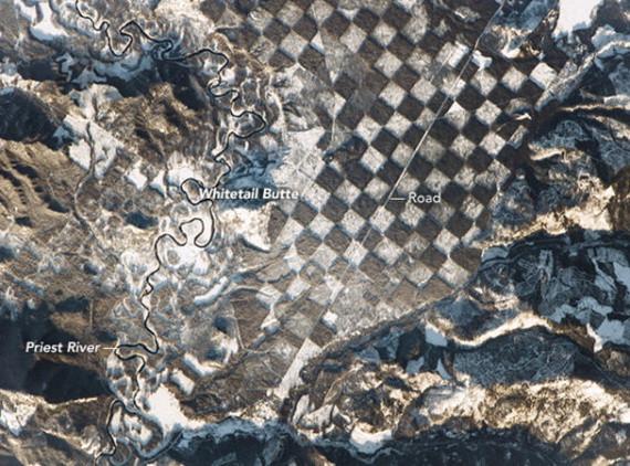 Вырубка леса по методу «шахматной доски»: плюсы и минусы для жизнедеятельности экосистемы