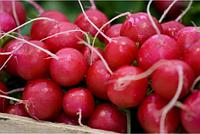 """Семена редиса оптом """"Анабель"""" 1 килограмм купить оптом от производителя в Украине 7 километр"""