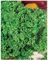 """Семена петрушки оптом """"Парамоунт кудрявая"""" 500 грамм купить оптом от производителя в Украине 7 километр"""
