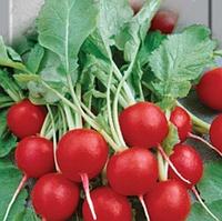 """Семена редиса оптом """"Илке"""" 25 килограмм в мешке купить оптом от производителя в Украине 7 километр"""