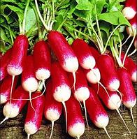 """Семена редиса оптом """"Французский Завтрак"""" 25 килограмм в ме купить оптом от производителя в Украине 7 километр"""