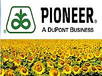 Семена подсолнуха Пионер ПР63А90 (Pioneer PR63A90)