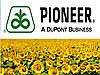 Семена подсолнуха Пионер ПР64ЛЕ25 (под Гранстар)