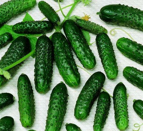 Семена огурцов оптом ФАСОВАННЫЕ ПО 500 ГРАММ
