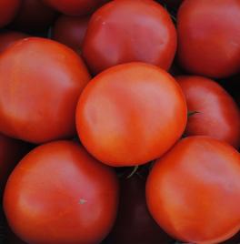 Семена томатов оптом ФАСОВАННЫЕ ПО 500 ГРАММ
