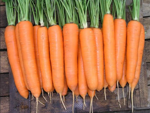 Семена моркови оптом ФАСОВКА ПО 1 КИЛОГРАММУ