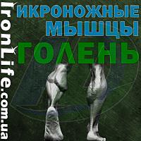 Икроножные мышцы. Голень