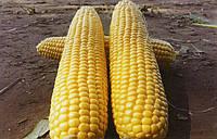 Кукуруза сахарная Шайнрок F1 100 000 семян