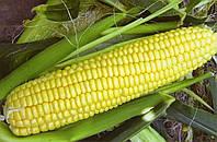 Кукурудза цукрова Свитстар F1 100 000 насінин, фото 1