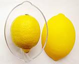 Контейнер для лимона ,харчовий пластик., фото 6