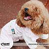 """Комбинезон, дождевик """"Все звезды""""  IS PET. Одежда для собак., фото 9"""
