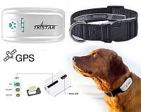 Ошейник с GPS трекером TKSTAR ТК-909 для средних и больших собак Влагопылезащита IP65