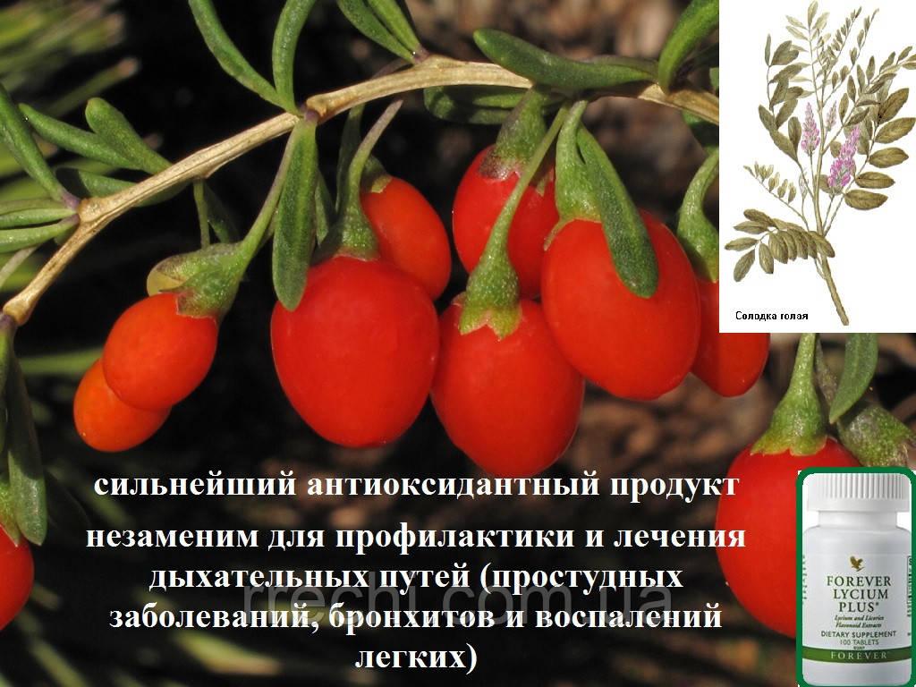"""Лайсиум и Солодка, Форевер, США, Forever Lycium Plus, 100 таблеток - ЧП """"Валеолог"""" в Киеве"""