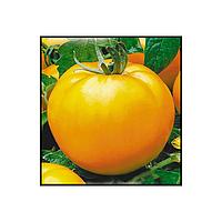 Томат Апельсин 30 шт