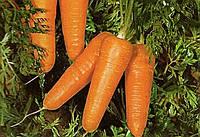 Морковь Редко 100 000 семян
