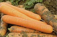 Морковь Чемпион F1 100 000 семян