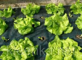 Черное агроволокно Agreen 50 г/м кв, спанбонд  для мульчирования клубники и других растений, фото 2