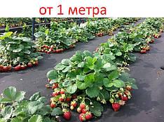 Мульчирующее черное агроволокно Agreen 50 г/м кв, спанбонд  для клубники и других растений