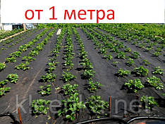 Агроволокно черное 50 г/м кв, спанбонд для мульчирования почвы
