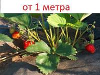 Агроволокно черное 50 г/м кв. для защиты от сорняков клубники, земляники, помидор и др растений