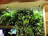 Растения для фитостен и фитокартин