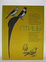 Птицы (б/у)., фото 1