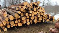 Чиновники Закарпатья призвали не вывозить лес-кругляк под видом дров