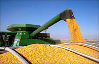 Семена кукурузы ВНИС